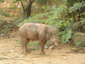 gajner-wildlife-sanctuary, bikaner
