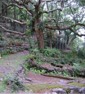 attractions-Botanical-Garden-Yercaud
