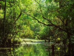everglades-region, usa