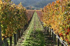 attractions-Napa-Valley-USA