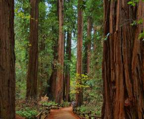 redwoods-national-park, usa