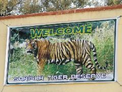 sariska-tiger-reserve, alwar