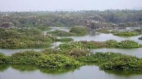 vedanthangal-bird-sanctuary, kanchipuram