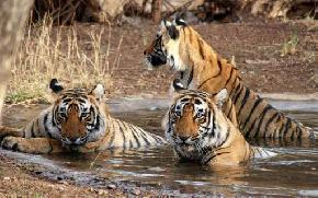 attractions-Jim-Corbett-National-Park-Bhimtal