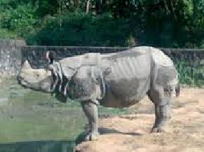 assam-state-zoo-and-botanical-gardens, dispur