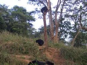 attractions-Gibbon-Wildlife-Sanctuary-Jorhat