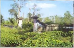 cinnamora-tea-estate, jorhat