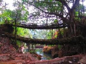 double-decker-living-root-bridge, cherrapunji