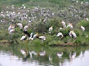 sajnekhali-bird-sanctuary, sundarbans