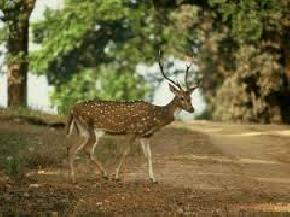 attractions-Halliday-Island-Sundarbans