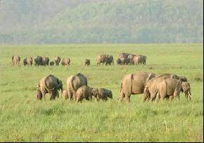 kameng-elephant-reserve, bomdila