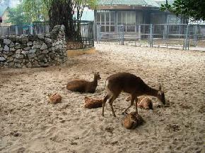 attractions-Hanoi-Zoo-Thu-Le-Park-Vietnam