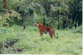 bhadra-wildlife-sanctuary-chikmagalur