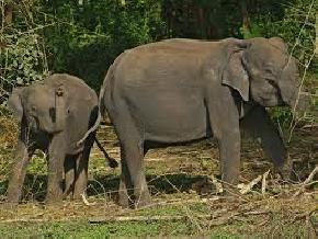 elephant-safari, kabini