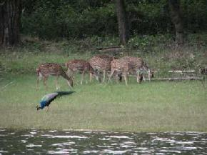 jungle-safari, kabini