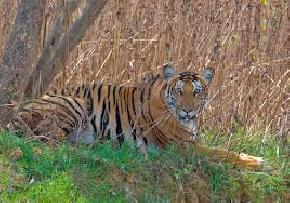 nagarhole-national-park, kabini