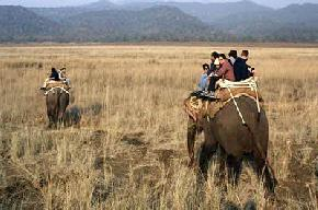 attractions-Jungle-Safari-Kaziranga-National-Park