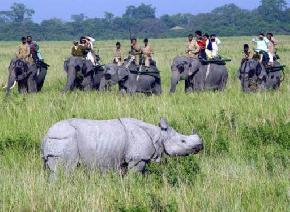 attractions-Kaziranga-Wildlife-Kaziranga-National-Park