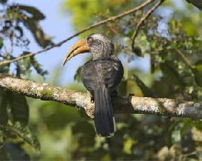 panbari-reserve-forest-kaziranga-national-park