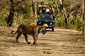 jungle-safari-corbett-national-park