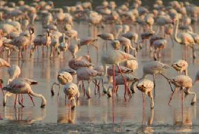 kutch-desert-wildlife-sanctuary-kutch