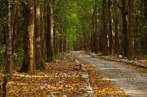 sitabani-corbett-national-park