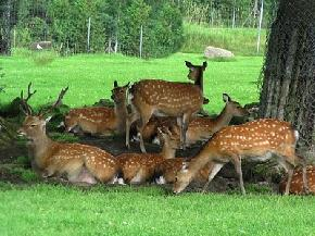 attractions-Deer-Park-Almora
