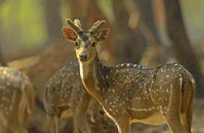 attractions-Deer-Park-Santiniketan