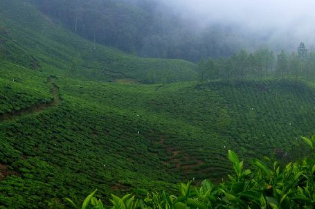 Munnar - Ideal Honeymoon