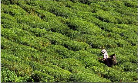 Darjeeling - Queen of Hills