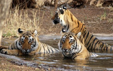 Ranthambore - Ideal for Wildlife Lovers