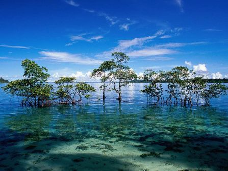 Havelock Island, andaman and nicobar islands sightseeing