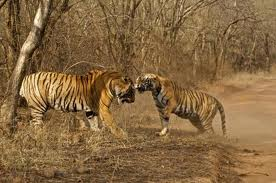 about Ranthambore