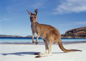 wildlife-in-australia