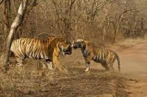Ranthambore travel guide