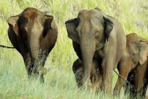 wildlife-in-thekkady