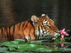 wildlife-in-bangladesh