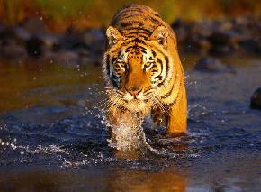 wildlife-in-sundarbans