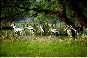 places to visit near Bharatpur
