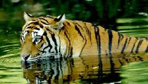 Corbett National Park travel guide