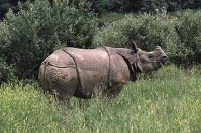 jungle-safari-in-kaziranga-national-park