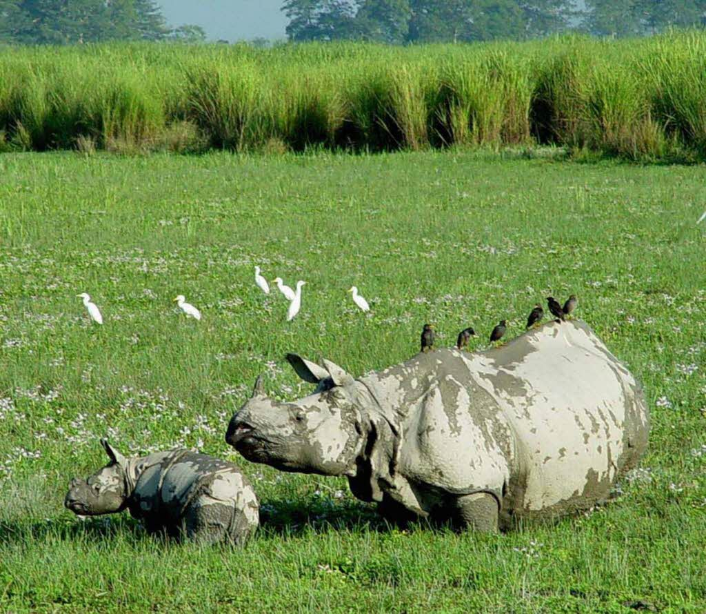 state-Assam tourist attractions