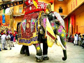 Elephant Rides in mount abu