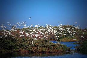 Bird Sanctuary in porbandar