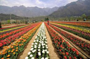 Garden in Jammu and Kashmir