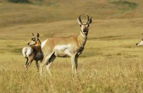 Wildlife in gulmarg