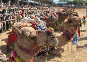 Pushkar-Fair in Rajasthan