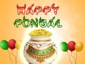 Pongal in Tamil Nadu